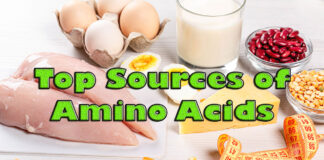Sources of Amino Acids